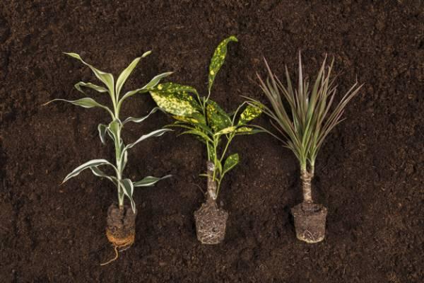 پرورش خاک