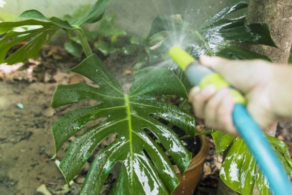آبیاری بیش از حد گیاه
