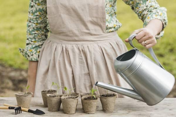 آبیاری گیاهان در سفر