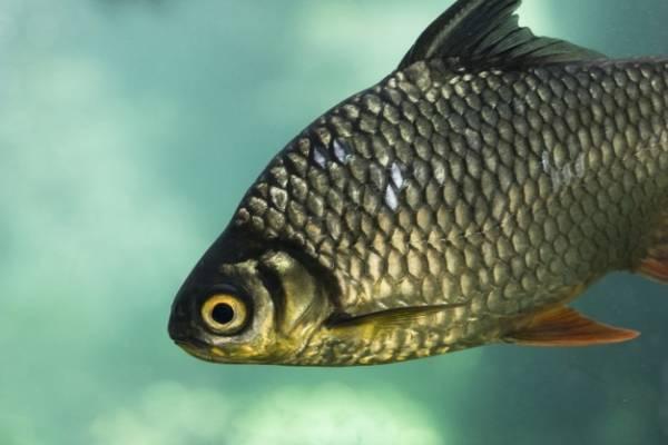 انواع ماهی ها