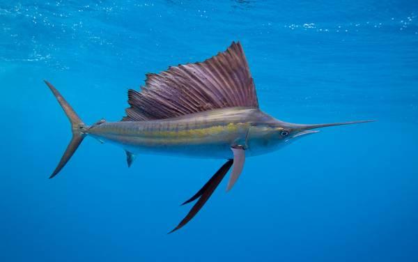 ماهی عجیب