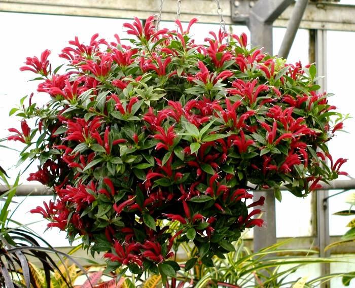 رشد گیاه آشیانتوس
