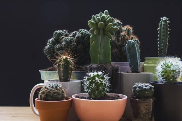 گیاهانی که امواج مضر وای فای را جذب می کنند
