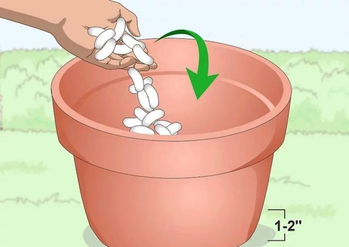 how to plant lavender in pots