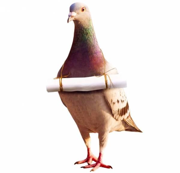 تربیت کبوتر نامه بر