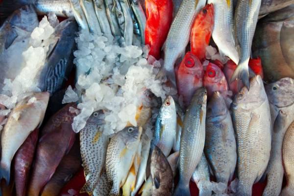 انواع مسمومیت ماهی