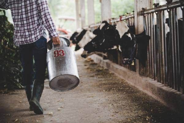 سطل شیر گاو
