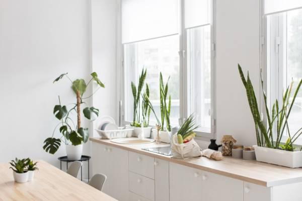 گیاهان خانگی سالم