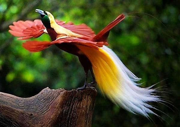 پرندگان بهشتی (مستند)