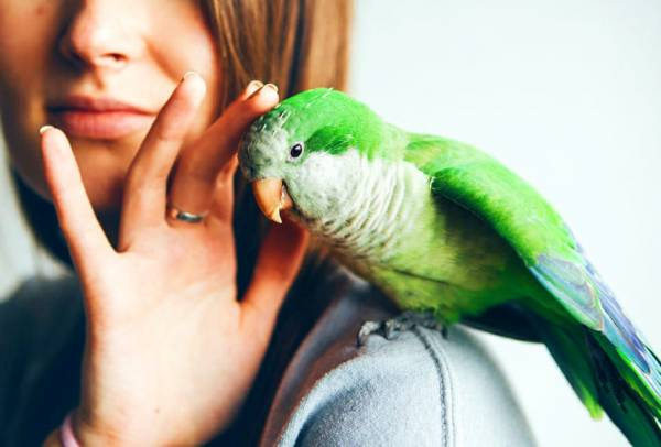 پرندگان زینتی