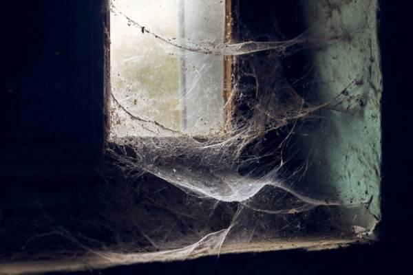 علت عنکبوت در خانه