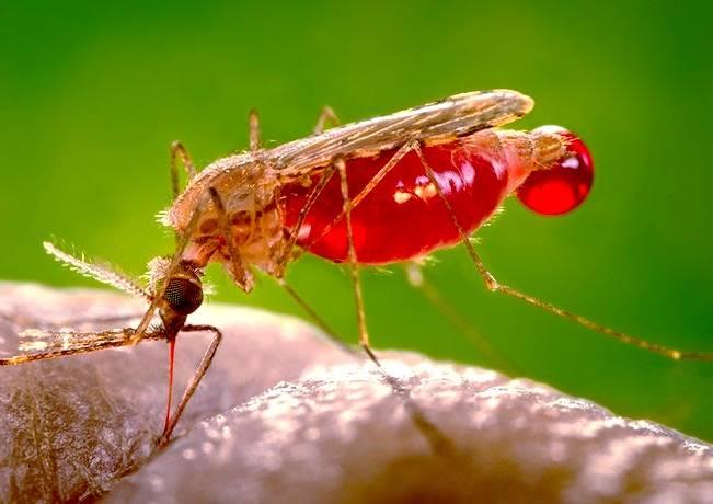گروه خونی محبوب حشرات