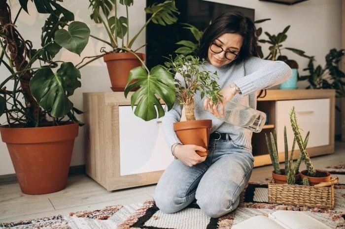 مراقبت از گیاهان در پاییز